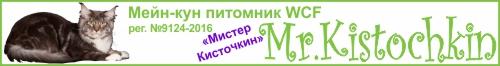 Питомник Мейн-кун Мистер Кисточкин Mr.Kistochkin www.cat-coon.ru
